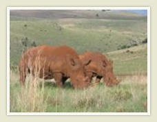 Cradle of Humankind: Rhino and Lion Park